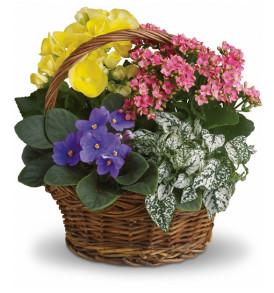 cesto-piante-miste-colorate