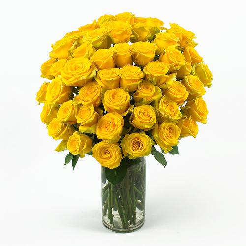 50_Yellow_Roses_Angle_Shot__72732.1416926184.500.750
