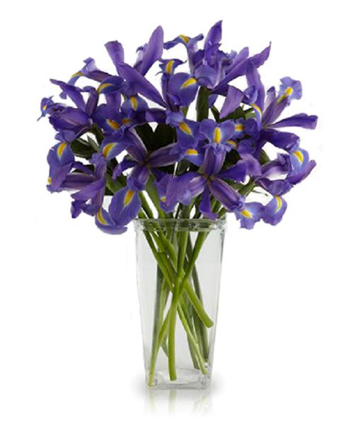 bouquet-di-iris