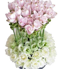 curcuma e rose bianche